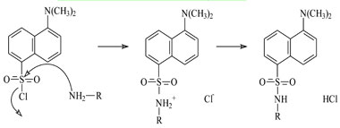 Derivatization reaction of BAs with dansyl-chloride